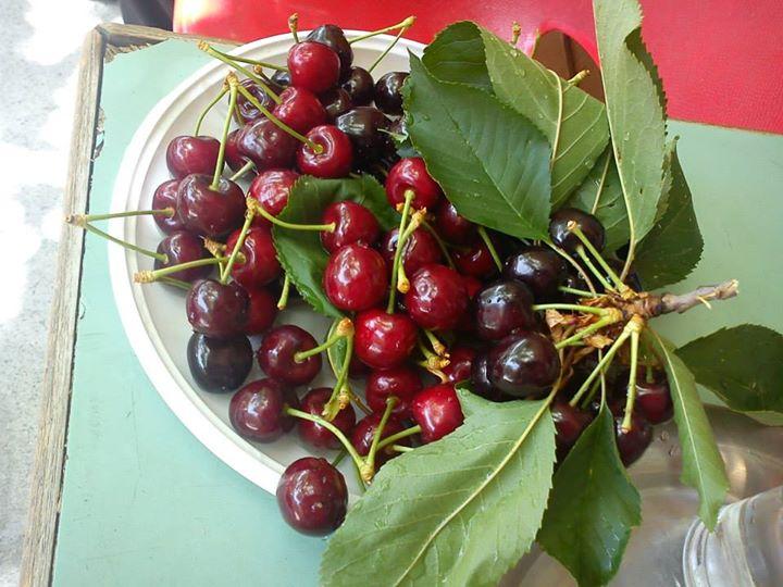 cherryplatanistasa